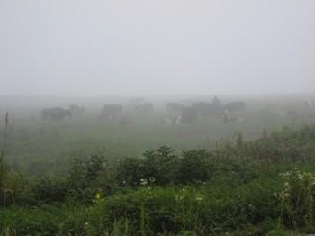 IMG_霧多布湿原の牛さん達-1.jpg